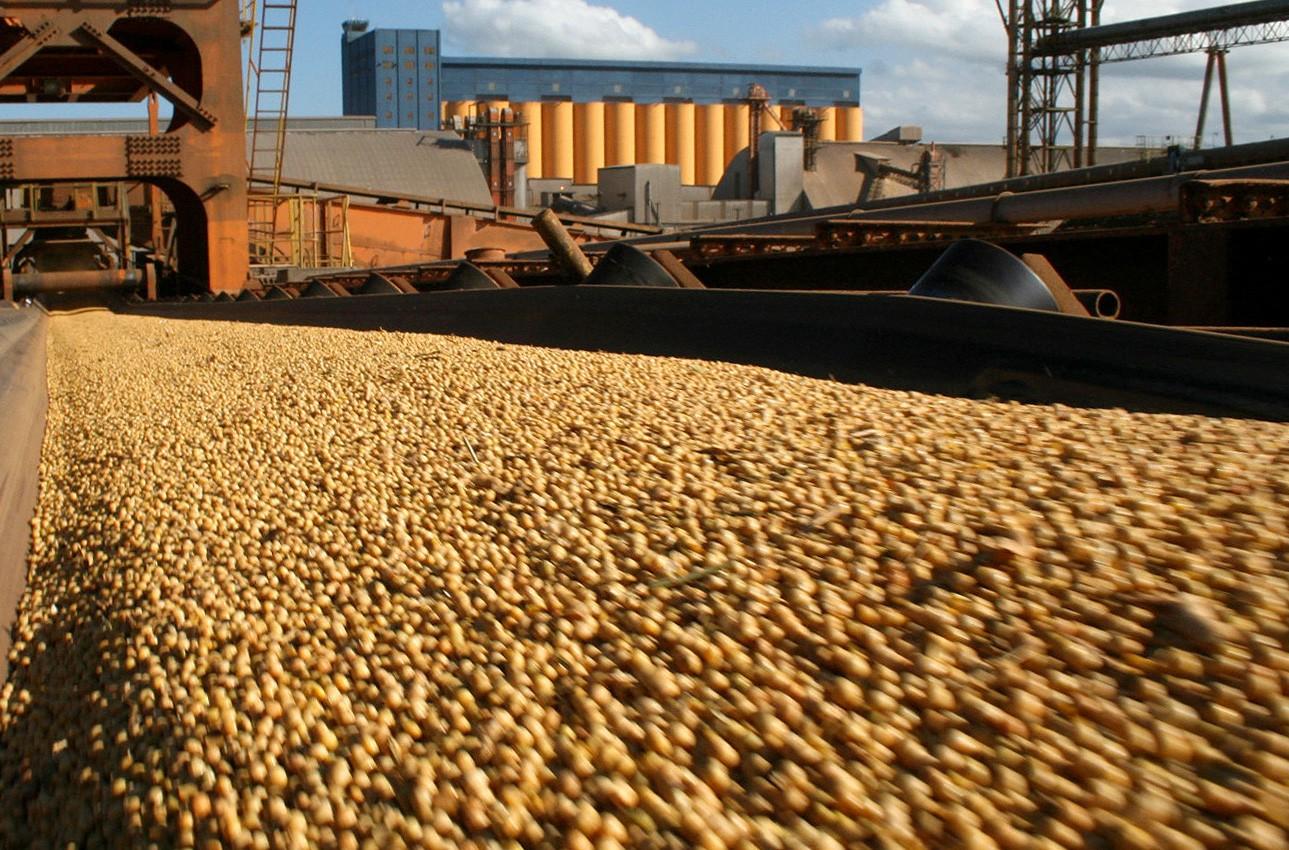 Los precios de la soja y el trigo con bajas en la Bolsa de Chicago
