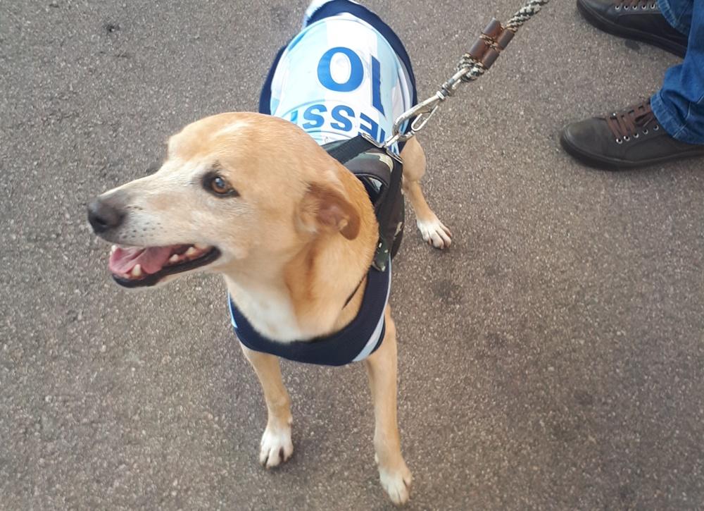 """Messi"", el perro de una pareja de ""nacionalizados"""