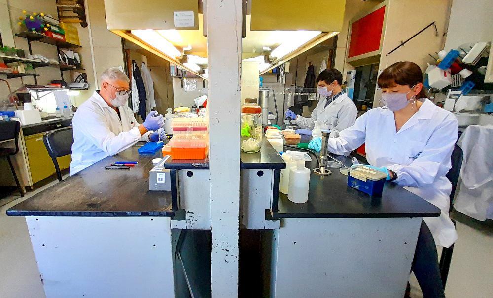 vacuna argentina contra el coronavirus by Télam