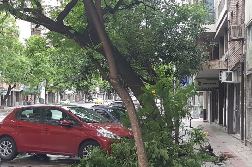 árboles caído tormenta LNM 3